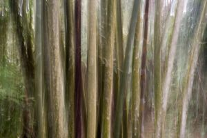 bamboo #2 - in the jungle