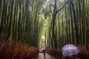 wet - kyoto