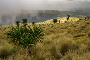 floodlit - simien mountains