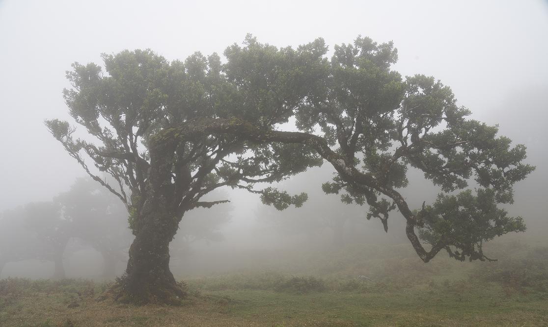 DSC4244_tree-Kopie